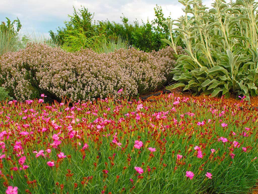 Compagnia delle piante ornamentali piante da giardino for Piante rampicanti ornamentali