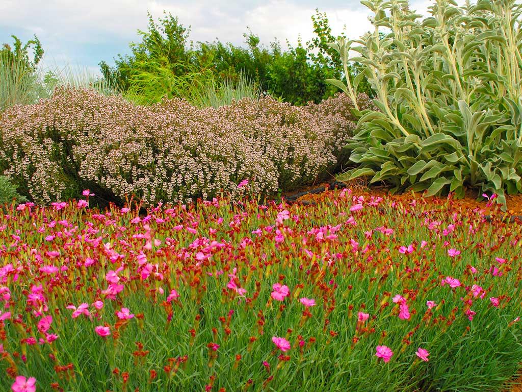 Alberi Nani Da Giardino compagnia delle piante ornamentali   piante da giardino