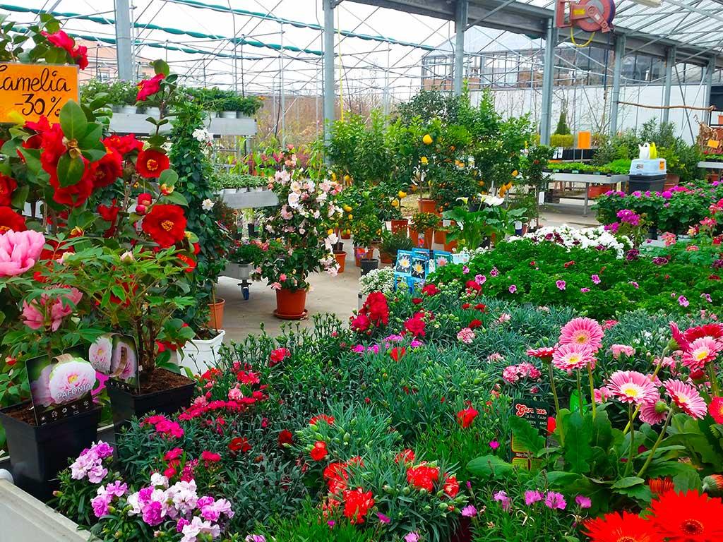 Serra per fiori e piante a Parma