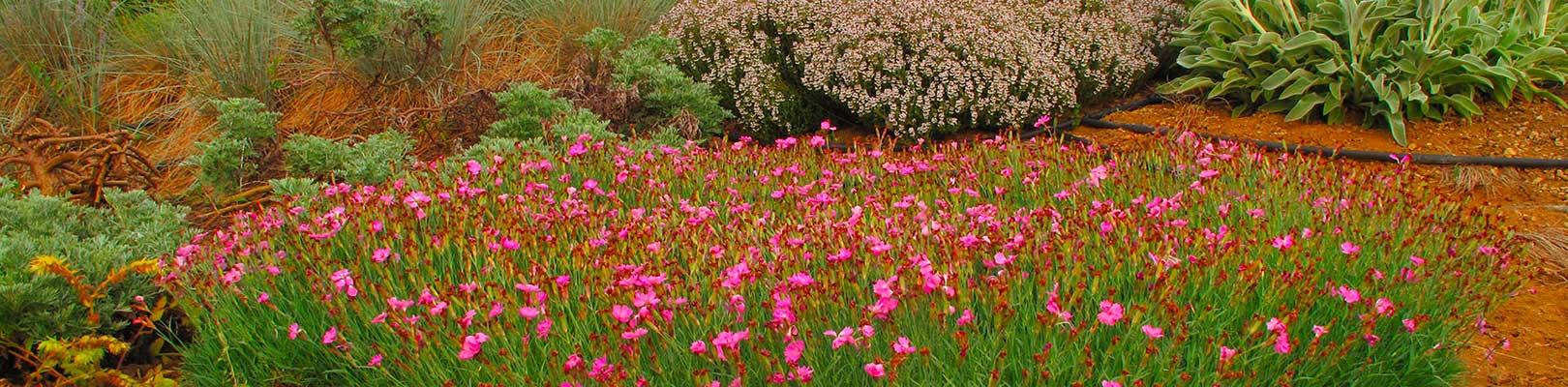 Compagnia delle piante ornamentali piante da giardino - Piante da giardino profumate ...