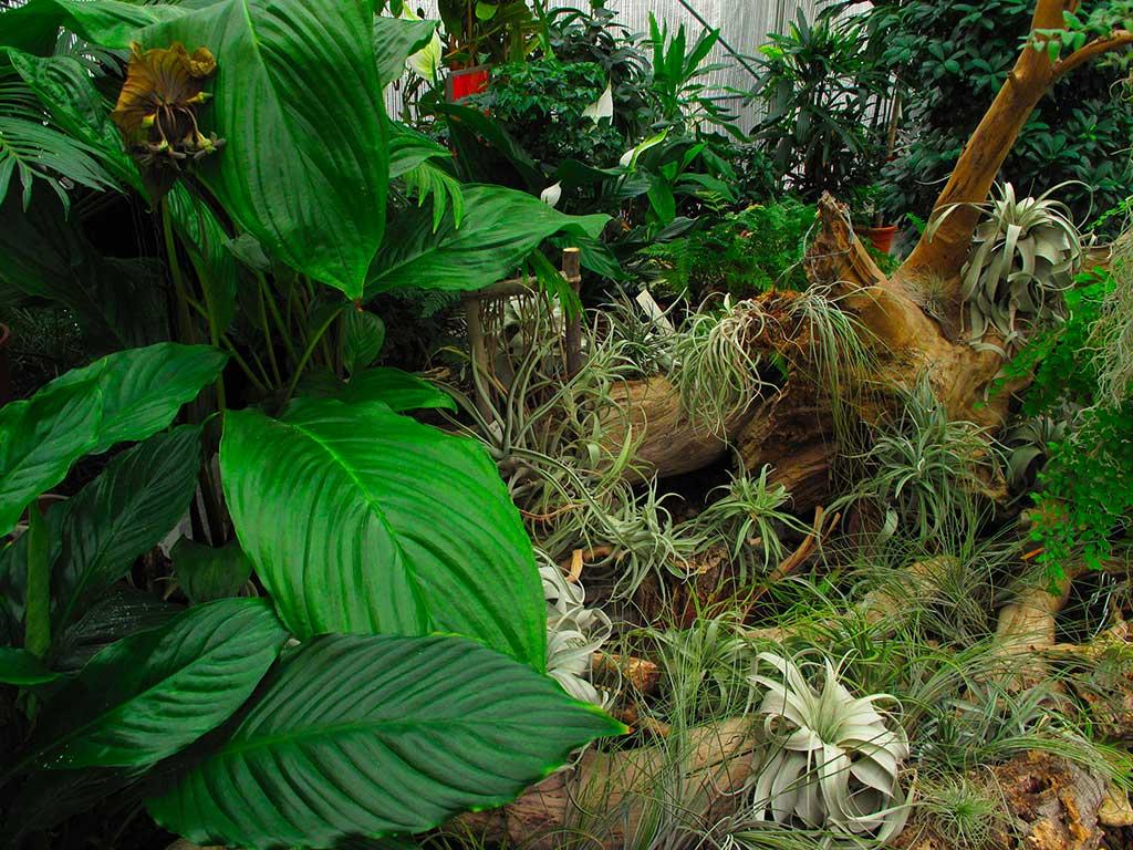 Piante Piccole Da Giardino compagnia delle piante ornamentali | piante da interno