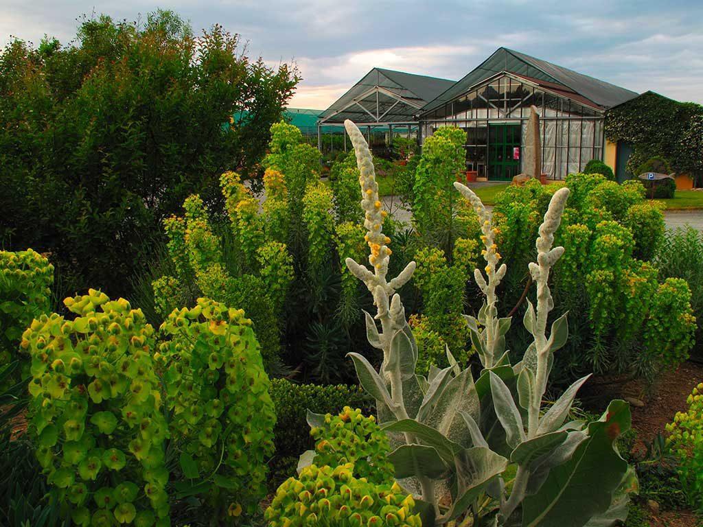Compagnia delle piante ornamentali piante da giardino